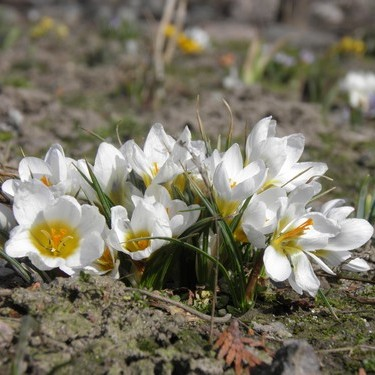 Oznaki wiosny...