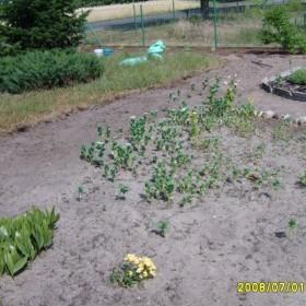 Metamorfoza ogródka&#x3B;)