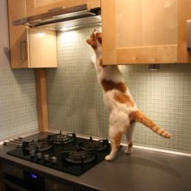 Perfekcyjny kot domu :)