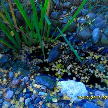 Dalszy ciąg jesiennych perypetii