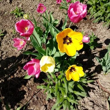 Wiosenny bukiet