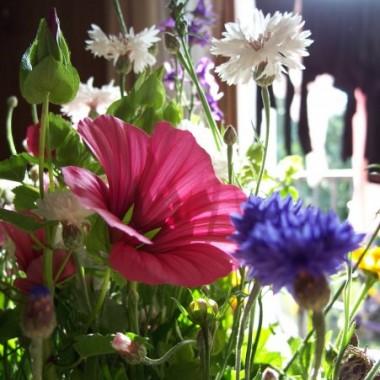 A to moje kwiaty w domu