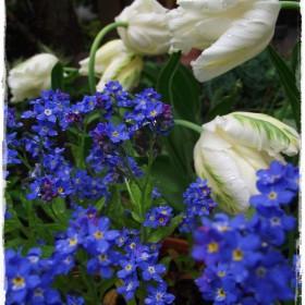 Wszystkie kolory wiosny&#x3B;