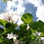 Ogród, Trochę ciepełka i zieleni.......