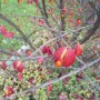 Pozostałe, Jesień w moim ogrodzie/tarasie - Trzmielina oskrzydlona