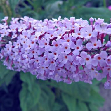 Wakacyjne kwiaty :))
