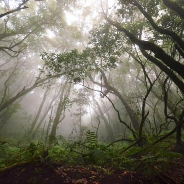 Wyjątkowy las wawrzynowy