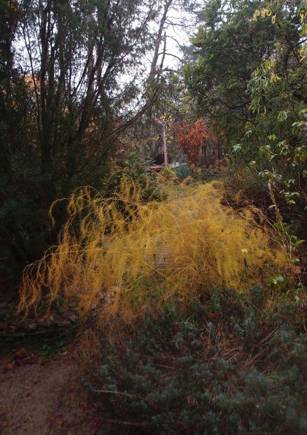 Ogród, Złoto w ogrodzie - szparagi