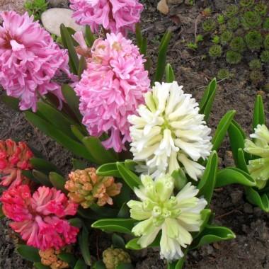 Wiosna w moim ogrodzie