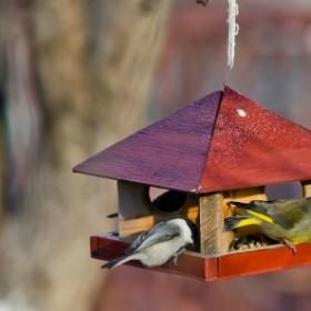 Ptasia stołówka - jak, kiedy i czym dokarmiać ptaki w zimowym ogrodzie?