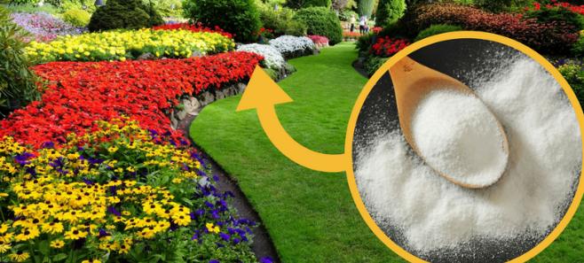 Zastosowania sody oczyszczonej w ogrodzie