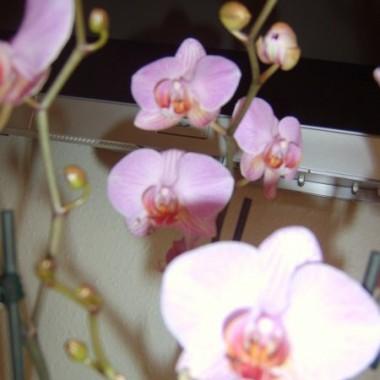 Moje kwiatki i cos co nie wiem co z tym zrobic &#x3B;)