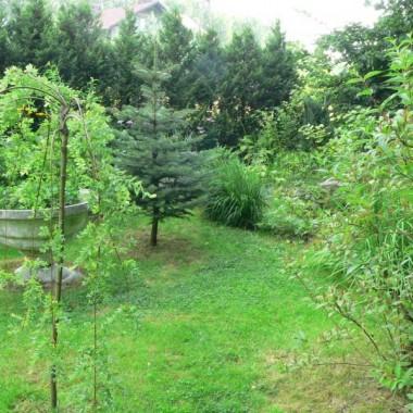 W zeszłym roku udało się część ogrodu doprowadzić do jako takiego porządku.