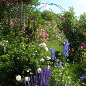 Czerwiec w ogrodzie różanym