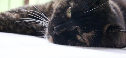 Jak nie zwariować, gdy w twoim domu rządzi kot?