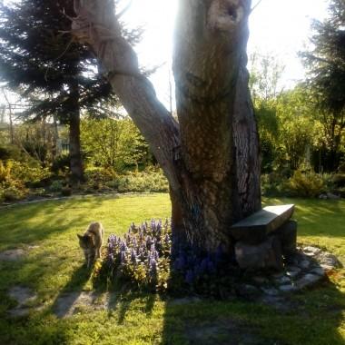 Wiosenna odsłona ogrodu