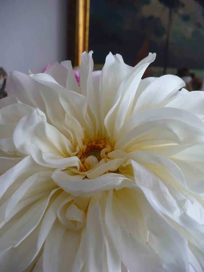 Pozostałe, Galeria jesienna.................październikowa............. - ................biała georginia .............jedna jedyna................
