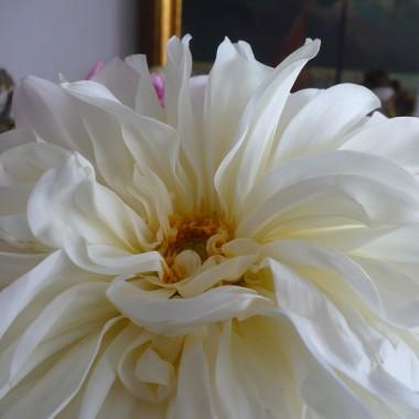 ................biała georginia .............jedna jedyna................