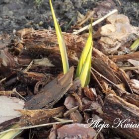 Ogród w lutym w Alei Kwiatowej