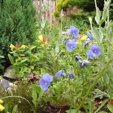 Mój mały ogródek - czerwiec