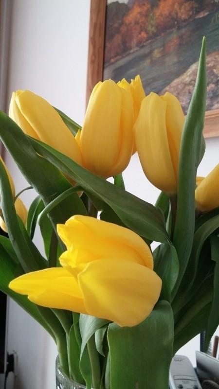 Salon, I już po świętach - Kocham tulipany:)