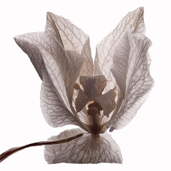 Rośliny, Orchidea