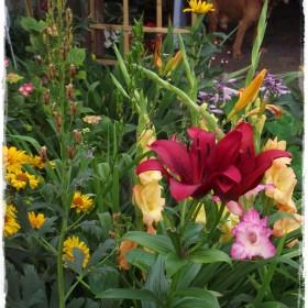 ....tu rządzą kwiaty i każdy ma swoje miejsce do życia&#x3B;