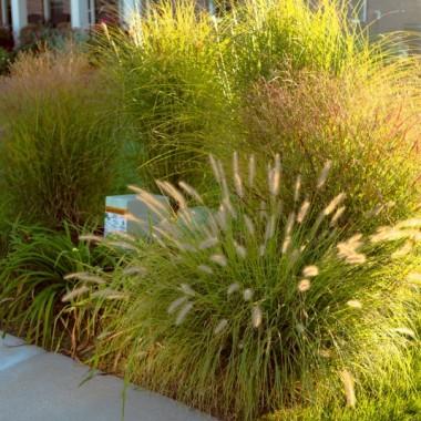 Najpopularniejsze trawy ozdobne do ogrodu