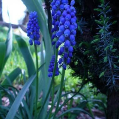 kwiaty z ogrdu, ich portrety:)