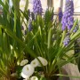 Balkon, Balkonowe chwile czas zacząć - w otoczeniu kwiatów
