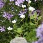 Rośliny, Nowe roślinki :-)
