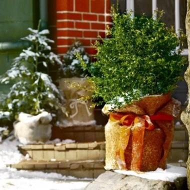 Przymrozki i zima już niedługo a moja różyczka na pniu bez wdzianka :(    Postanowiłam podpatrzeć co tam w necie mają  na takie osobistości no i inne drzewka coby roślince ciepło było :) i balkon  w zimie jakos się prezentowal... A może Wy Drodzy Mili jakieś swoje propozycje podrzucicie??? Wdzięczna będę :)