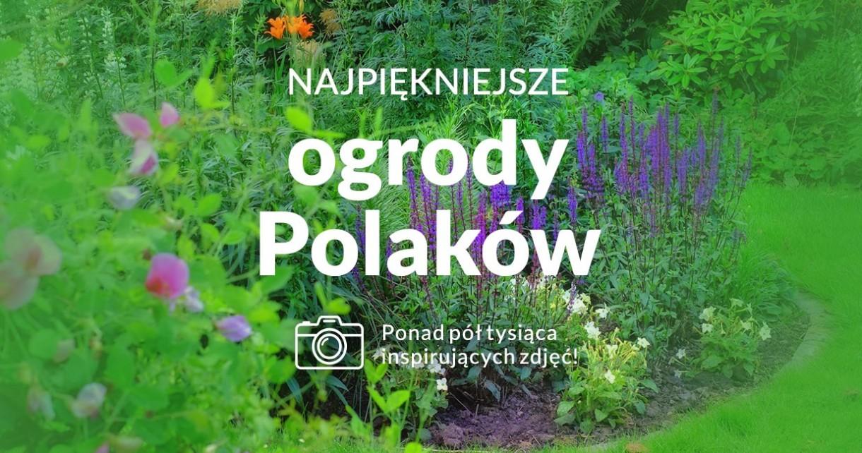 Najpiekniejsze ogrody Polaków