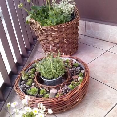 Witam!Dzisiejszy dzień spędziłam bardzo pracowicie,wczesnym rankiem udałam się na giełdę kwiatową,aby zakupić roślinki na balkon. W tym roku po raz pierwszy zdecydowałam się na zmianę koloru pelargonii z czerwonego na różowy i nie zakupiłam bluszczolistnej jak zawsze ale,rabatową.Zakupiłam także nowe kosze wiklinowe.Efekt końcowy oceńcie sami...zapraszam na mój majowy balkon:)))