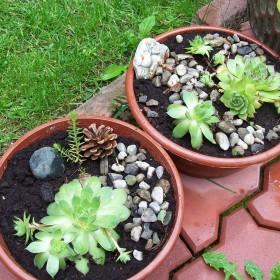 Troszkę ogródka
