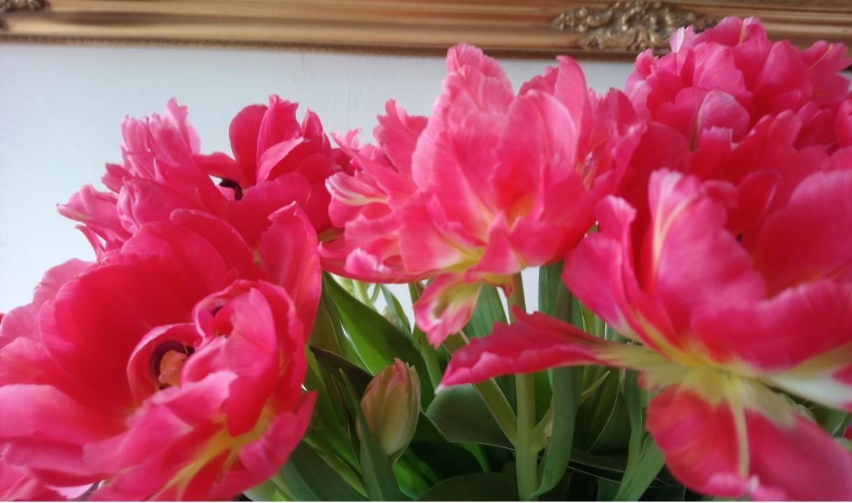 Balkon, Wiosenne kwiaty.............. - .................i tulipany...............