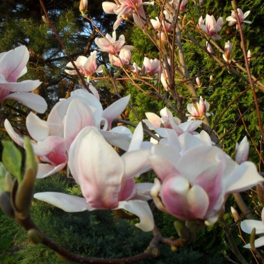 Podkarpacka wiosna