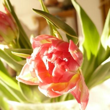 .............i tulipany............