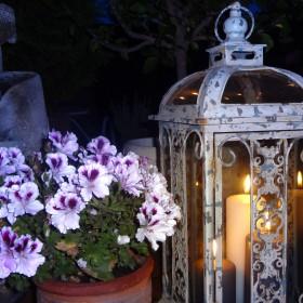 Nocą w ogrodzie...
