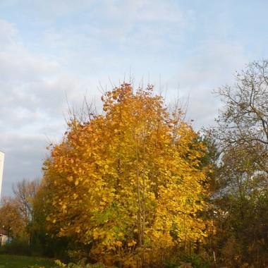 ...............i złota jesień...............