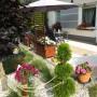 Rośliny, Lato w moim domu
