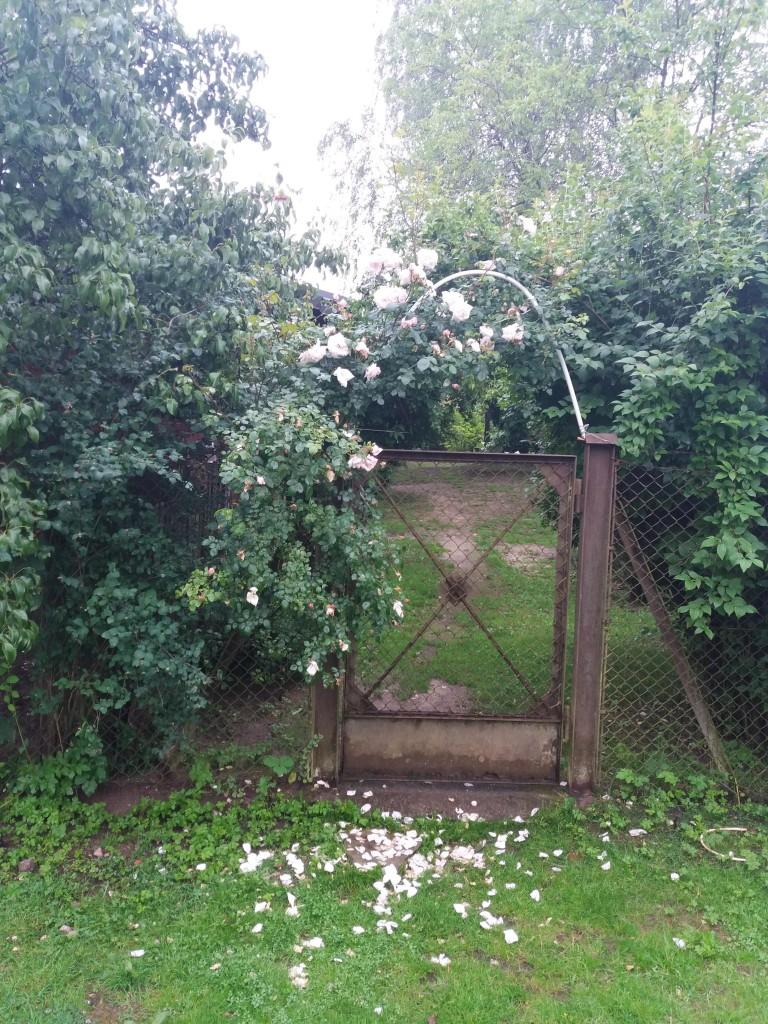 Ogród, Trochę widoków z Krainy Gotów.