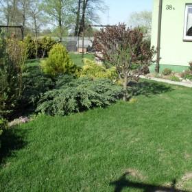 Mój ogród w kwietniu :)