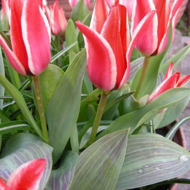 wiosną wszystko wygląda weselej ,nawet chaszcze w tym czasie przybierają magicznego wyrazu