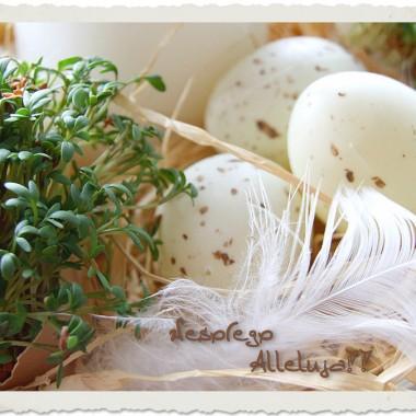 Najserdeczniejsze życzenia zdrowych,radosnych i spokojnych Świąt Wielkiej Nocy,smacznego jajka, mokrego dyngusa,a także odpoczynku w rodzinnym gronie.
