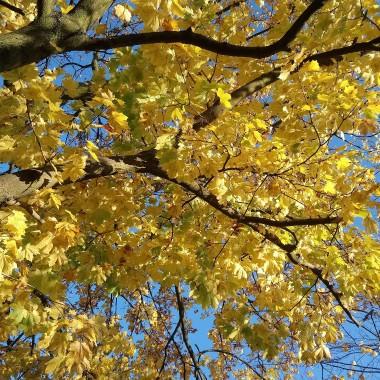 ...................jesień już................