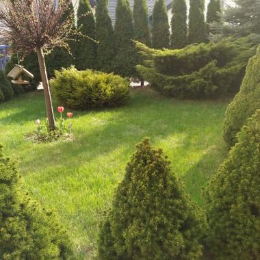 przed domem zielono a za drogą mamy budowę .....osiedle coraz większe ....