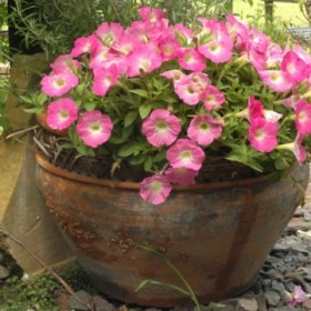 zioła i kwiaty w moim ogrodzie&#x3B;-))