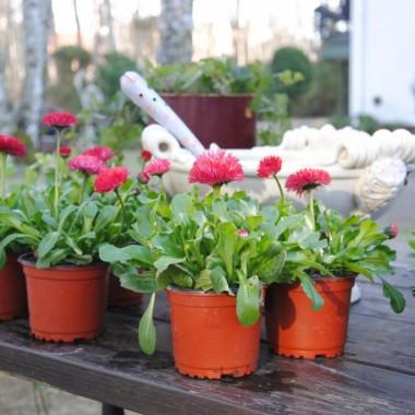 no i to co lubię ...sadzenie :) póki co nieśmiało ,ale się rozkręcę :)