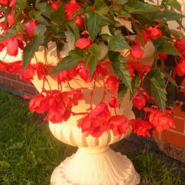 moje kochane roślinki